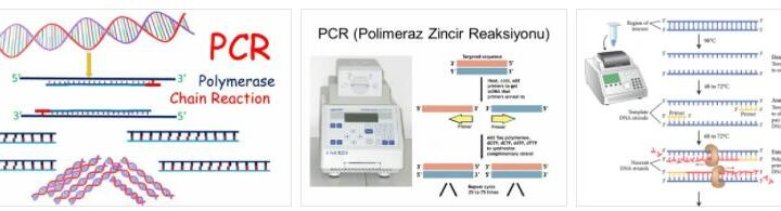 About PCR